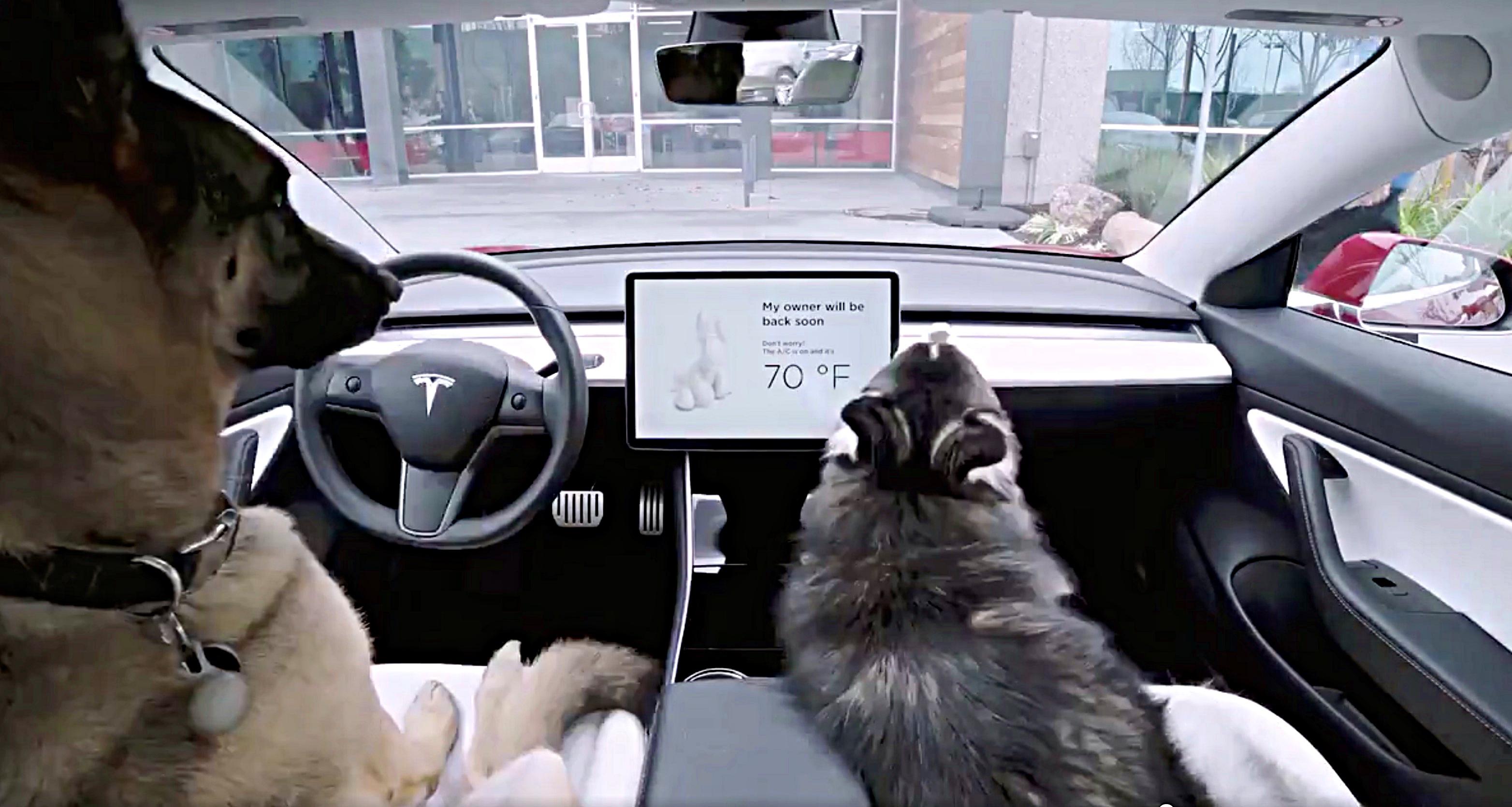 """""""Dog Mode"""" per lasciare il tuo cane in auto!"""